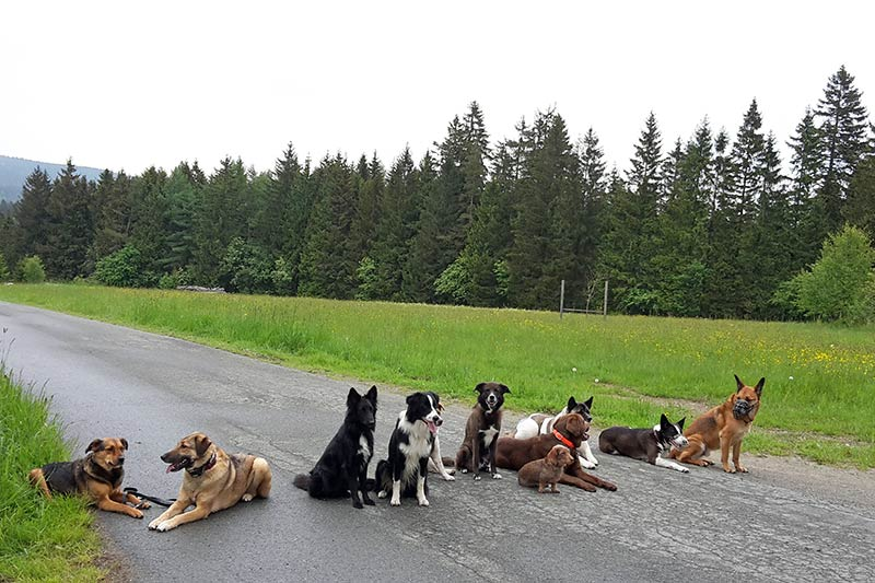 Kommando Platz beim Hunde Gruppentraining
