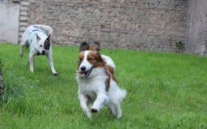 Junghundekurs der Pfalz-Hunde beim spielen.