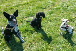 Welpengruppe der Hundeschule Pfalz-Hunde